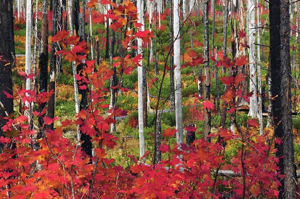 Char Wall Art - Photograph - Autumn At The Santiam Pass, Oregon, Usa by Michel Hersen