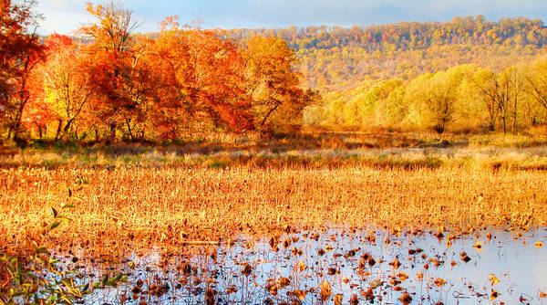 Photograph - Autumn At Wildwood by Shelley Neff