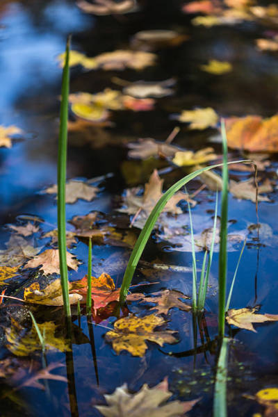 Wall Art - Photograph - Autumn Attraction by Dale Kincaid