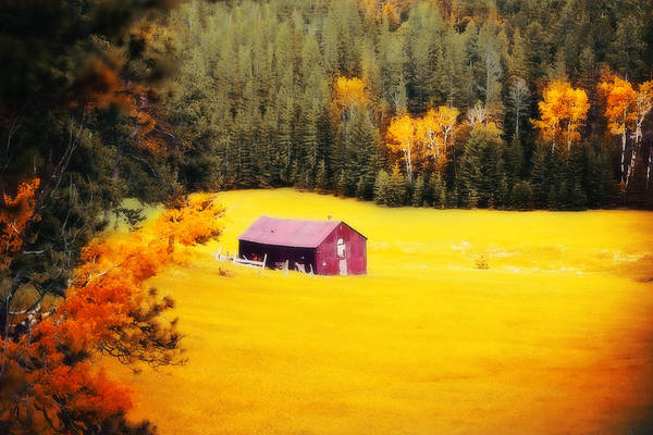 Photograph - Fall On A South Dakota Meadow by Amanda Smith
