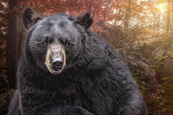 Photograph - Autumn Bear by Mary Almond