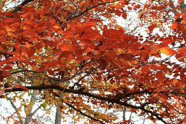 Photograph - Autumn Beauty by Candice Trimble