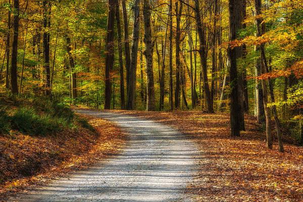 Photograph - Autumn Beauty by Dale Kincaid