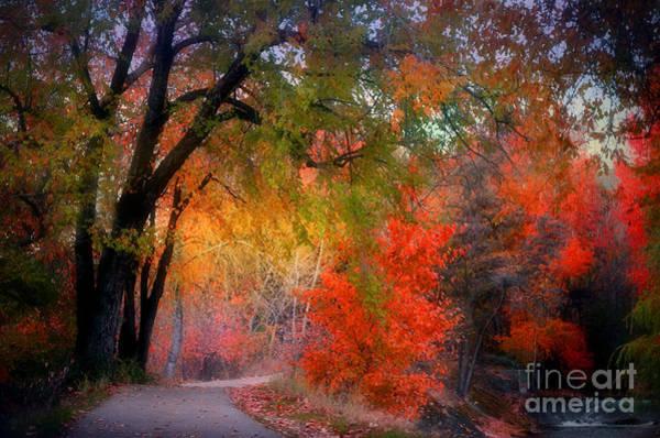 Photograph - Autumn Bloom by Tara Turner
