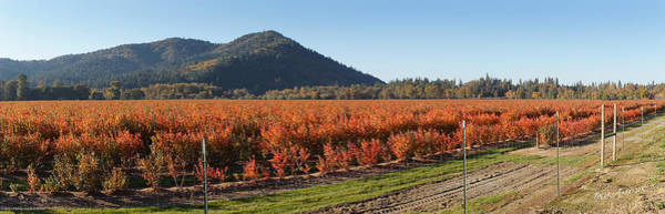 Rogue Valley Photograph - Autumn Blueberry Panorama by Mick Anderson