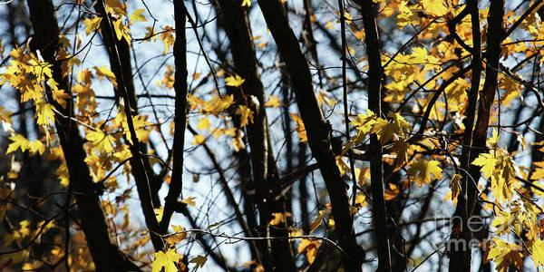 Photograph - Autumn Branches by Linda Shafer