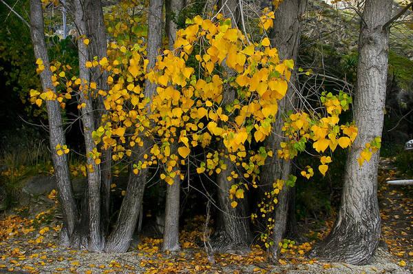 Photograph - Autumn Breakout by Jenny Setchell