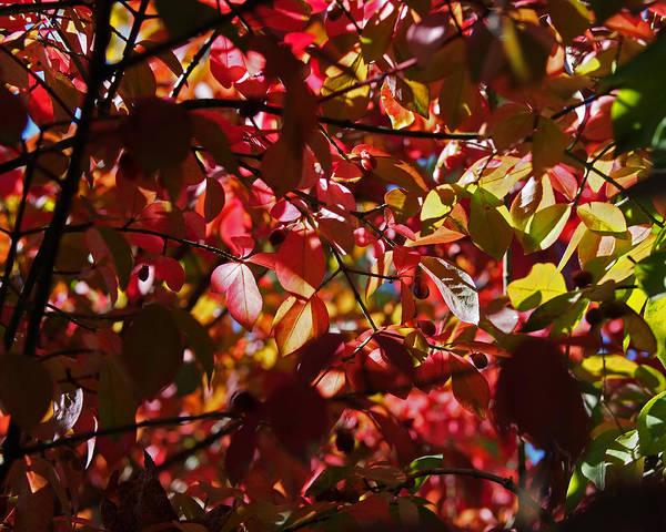Photograph - Autumn Breeze by Rona Black