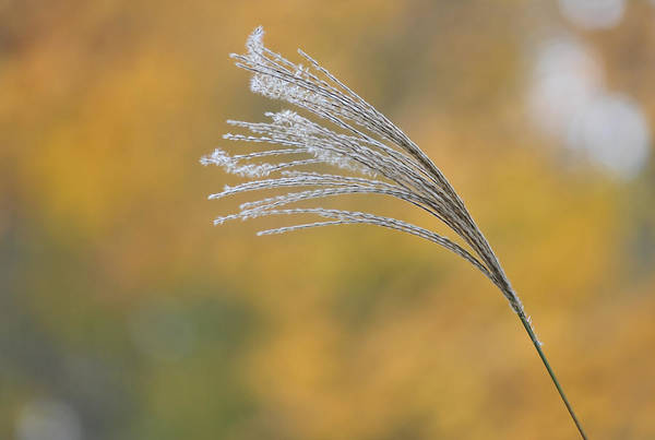 Photograph - Autumn Breeze by Terry DeLuco