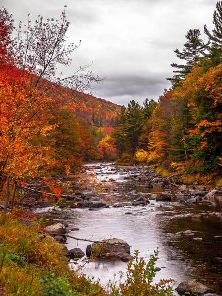 Photograph - Autumn Brook by Jim DeLillo