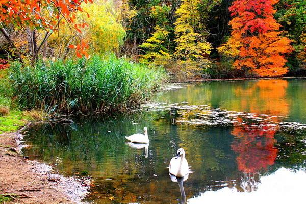 Wall Art - Photograph - Autumn By The Swan Lake by Dora Sofia Caputo Photographic Design and Fine Art