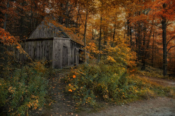 Photograph - Autumn Canopy by Robin-Lee Vieira