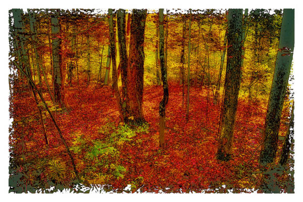 Photograph - Autumn Carpet by David Patterson