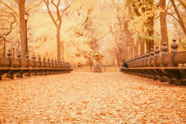 Wall Art - Photograph - Autumn - Central Park Elm Trees - New York City by Vivienne Gucwa