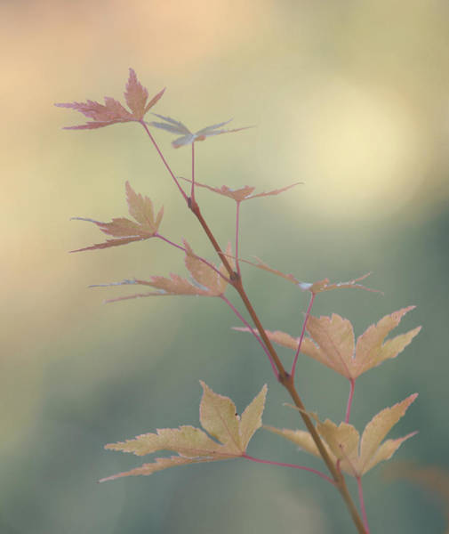 Vogel Photograph - Autumn Changes by Angie Vogel
