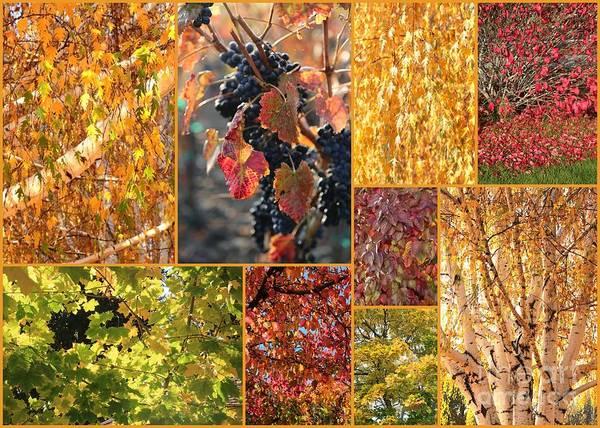 Photograph - Autumn Collage by Carol Groenen