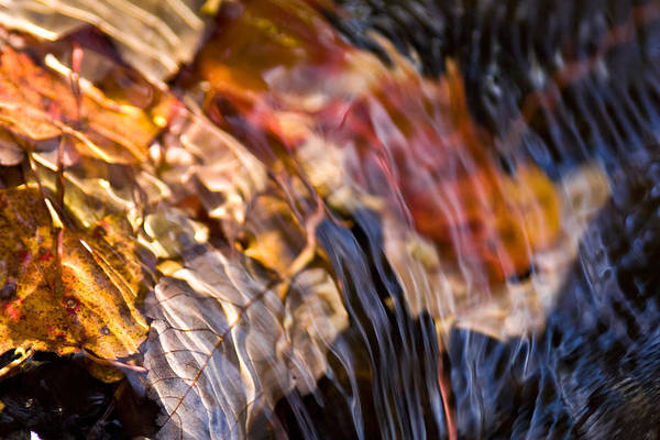 Autumn Color Beneath The Surface Art Print
