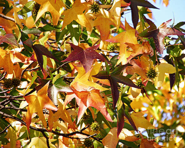 Wall Art - Photograph - Autumn Color by Emily Kelley