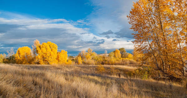 Photograph - Autumn Color by Fran Riley