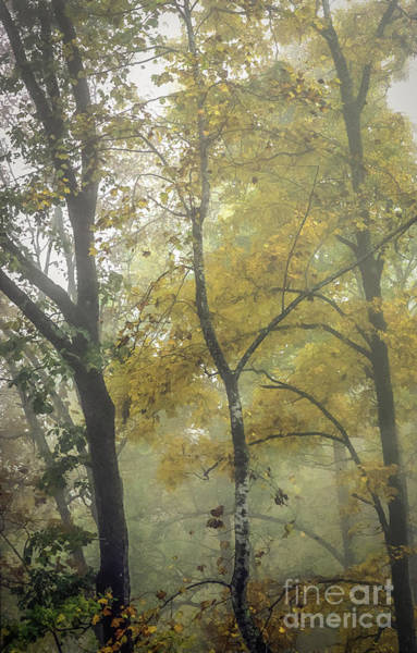 Photograph - Autumn Color In Fog by David Waldrop
