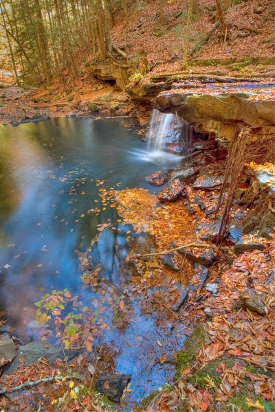 Photograph - Autumn Color In Pond by John Magyar Photography