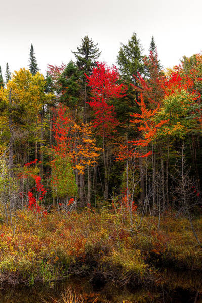 Photograph - Autumn Color Near Raquette Lake by David Patterson