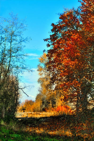 Photograph - Autumn Color - Nisqually Wildlife Refuge by David Patterson