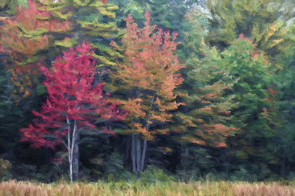 Wall Art - Photograph - Autumn Color Painterly Effect by Carol Leigh