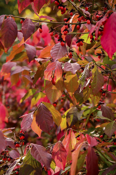 Photograph - Autumn Color by Robert Mitchell