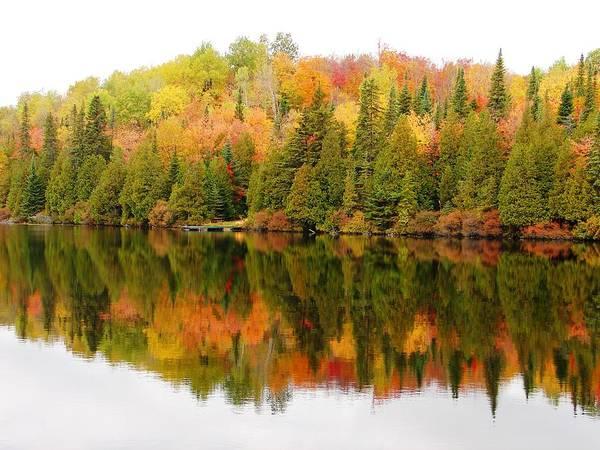 Photograph - Autumn Colors by Cristina Stefan
