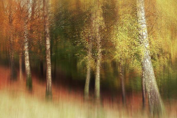 Birch Photograph - Autumn Colors by Gustav Davidsson