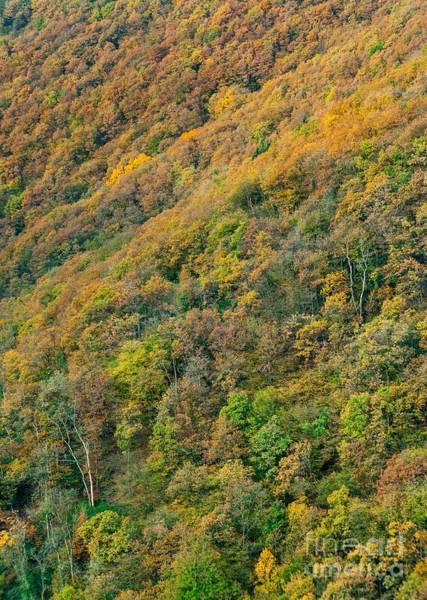 Wall Art - Photograph - Autumn Colors by Maciej Markiewicz