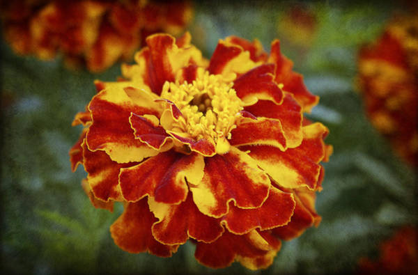 Photograph - Autumn Colors by Milena Ilieva