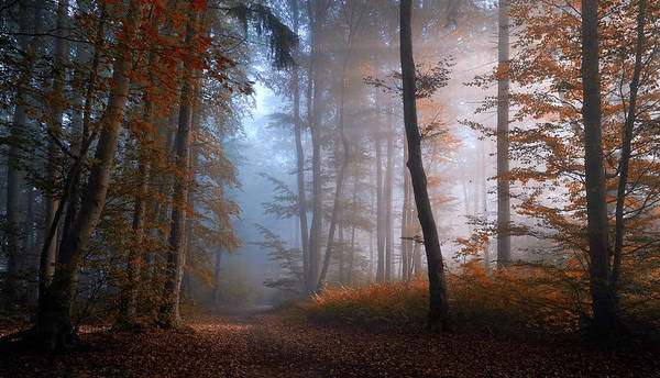 Atmosphere Wall Art - Photograph - Autumn Colors by Norbert Maier