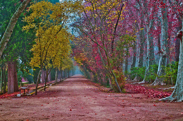 Niebla Wall Art - Photograph - Autumn Colors by Aurelio Bello