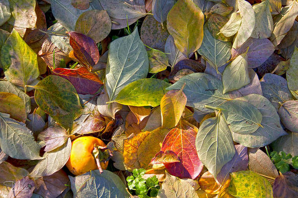 Photograph - Autumn Colors by Raffaella Lunelli