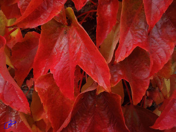 Photograph - Autumn Colour Change by Colette V Hera  Guggenheim