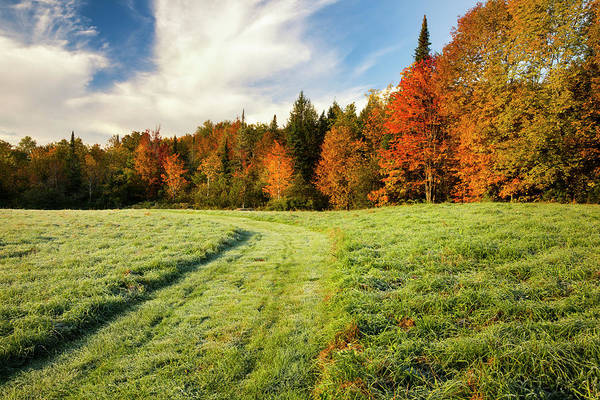 Waterbury Photograph - Autumn Coloured Trees And A Grass Field by Jenna Szerlag
