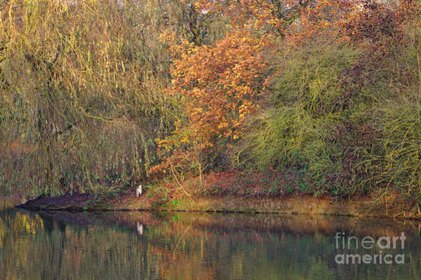 Photograph - Autumn Colours And Heron by Jeremy Hayden