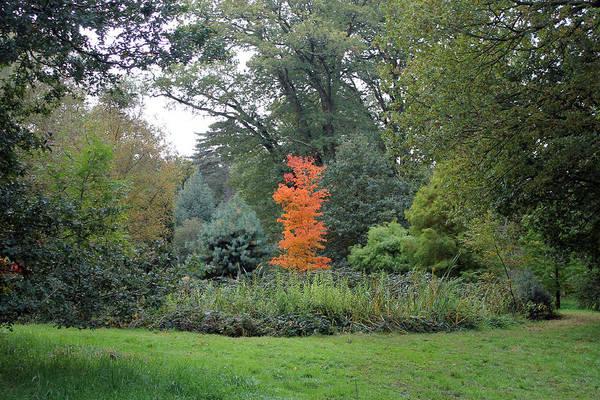 Photograph - Autumn Colours by Tony Murtagh
