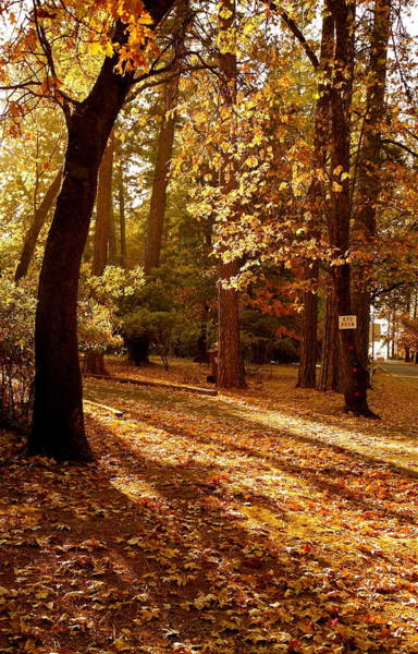 Autumn Country Lane Evening Art Print