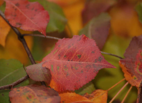 Photograph - Autumn Crisp by Denise Beverly
