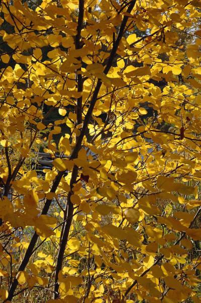 Photograph - Autumn Cross by Bruce Gourley