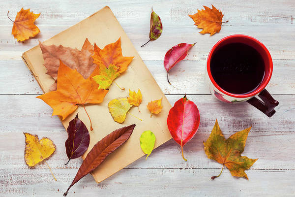 Mug Photograph - Autumn Cup Of Tea by Flavia Morlachetti