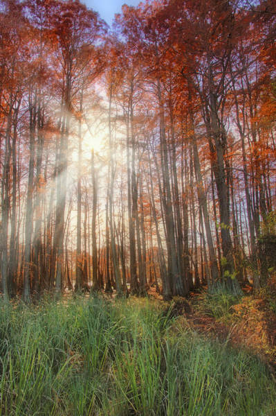 Photograph - Autumn Cypress - Fall - Trees by Jason Politte