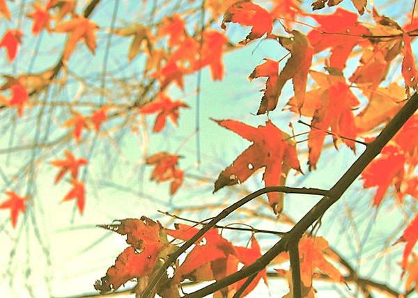 Photograph - Autumn Dance by HweeYen Ong