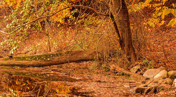 Autumn In New England Photograph - Autumn Day by Lourry Legarde