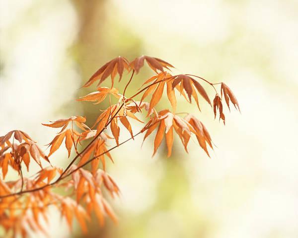 Wall Art - Photograph - Autumn Days by Carolyn Cochrane