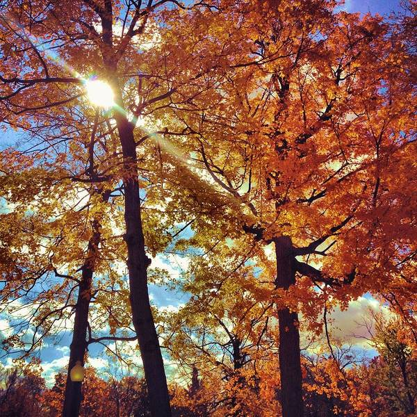 D Day Photograph - Autumn Days by Dan Sproul