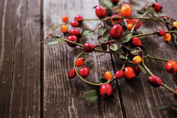 Hip Photograph - Autumn Decoration With Rose Hips by Moncherie